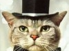 Cat-with-hatT